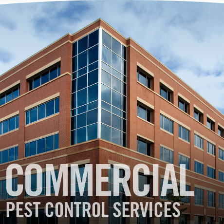 pest control Southeast Texas, pest control SETX, pest control Beaumont TX, pest conrol Port Arthur, pest control Orange TX, pest control Vidor, pest control Lumberton TX, pest control Sour Lake, rodent control Beaumont, SETX rodent control, Southeast Texas rodent control