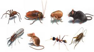 offshore pest control Texas - Offshore pest control Louisiana