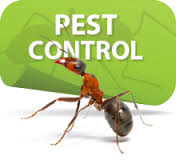 Pest Control Orange Tx, pest control Winnie TX, pest control Buna TX, pest control Port Neches TX, pest control Woodville TX,