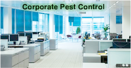 Pest Control in Beaumont corporate offices, Commercial pest control Southeast Texas, Commercial pest control Beaumont Tx, Commercial pest control SETX, Commercial pest control Golden Triangle Tx, Commercial pest control Port Arthur, Commercial pest control Nederland Tx,