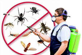 Pest Control in Port Arthur Groves TX